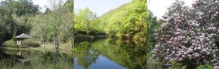 レンタサイクル(e-bike)で行く鈴鹿国定公園、鎌掛谷ホンシャクナゲ群落の環境保全と近江日野田舎体験ツアー
